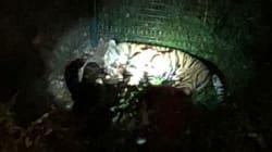 Un tigre s'échappe d'un cirque dans le 15e arrondissement de Paris, avant d'être