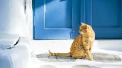 AAA cercasi amante dei gatti che passi il tempo con 55 felini (in un'isola greca da