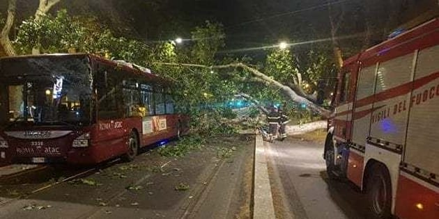 Platano cade su autobus ferito l'autista