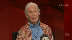 Jane Goodall's Chilling Message: 'We Have Stolen Our Children's