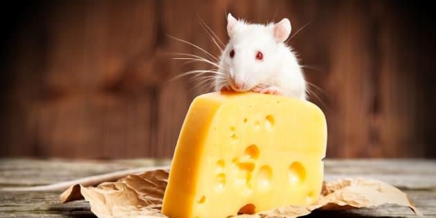 Quand les souris boivent, le fromage y passe.