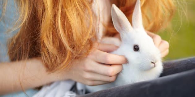 huffington post animal testing