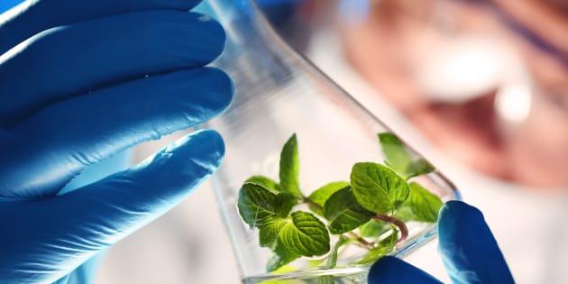 L'entreprise CO2 Solutions veut capturer du carbone de Produits forestiers Résolu pour mieux faire pousser les légumes de Serres Toundra.