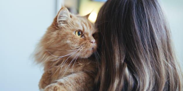 Idee regalo per chi ama i cani e i gatti  14d95bd6785
