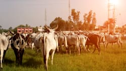 BSF Jawan Attacked By Cattle Smugglers In