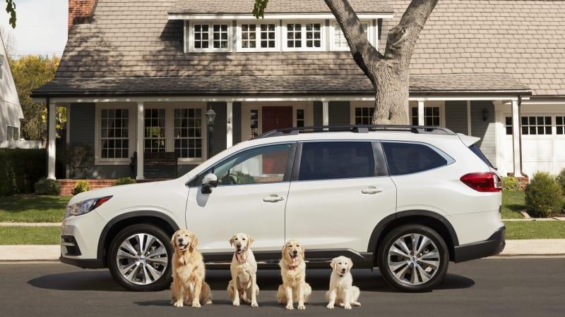 Subaru launches 4 new TV spots with Barkley dogs - Autoblog