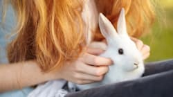 Cosmetic Animal Testing Is Still Legal, But Hopefully Not For