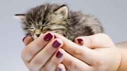 ネコ用人工血液の開発に成功、国際宇宙ステーション「きぼう」での実験が貢献