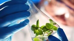 Des entreprises écologiques s'impatientent face à la nouvelle Loi sur la qualité de