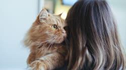 10 idee regalo per chi ama i cani e i