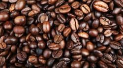 Il 60% delle specie di caffè rischia di sparire, secondo un nuovo