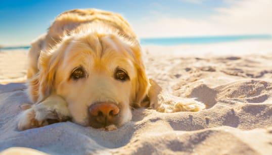 「ボクたちはハダシだよ...」炎天下の犬の散歩は肉球の火傷のもと。ペット保護団体が呼びかけ