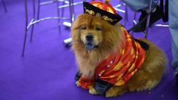 Voici 15 photos du Concours canin de New York qui rend le meilleur ami de l'homme encore plus