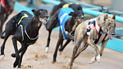 Greyhound Lovers Hit Sydney To Back Dog Racing