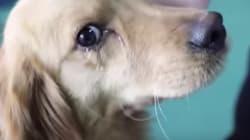 Un perro 'llora' tras ser rescatado de un vendedor de