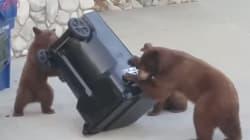 Esta familia de osos curiosea la basura de una casa en busca de un