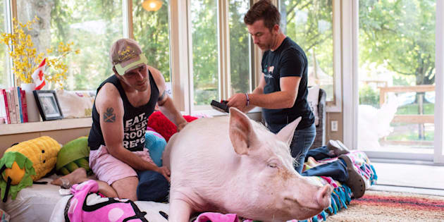 A celebrity pig whose owners raised more than half a million dollars to bring an oversized CT scanner to Canada has been diagnosed with cancer.