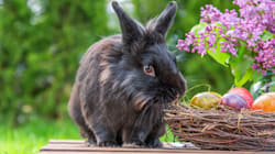 Forcing Foster Parents To Say Easter Bunny Is Real Violates Their Rights: