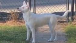 Esta perra ciega y sorda enamora a Internet por lo que hace cuando su dueño llega a
