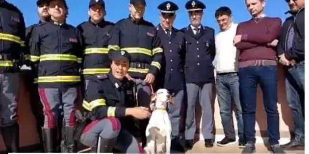 La storia di Pina, cagnolina abbandonata in strada, salvata