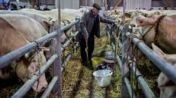 1,3 milliard de Chinois vont à nouveau pouvoir manger du bœuf