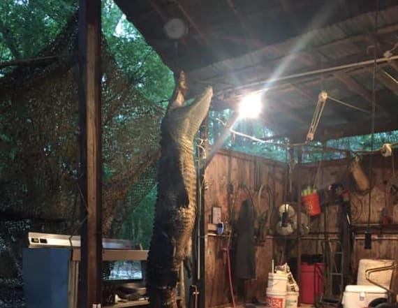 Kayaker recalls time 360-pound alligator chased him