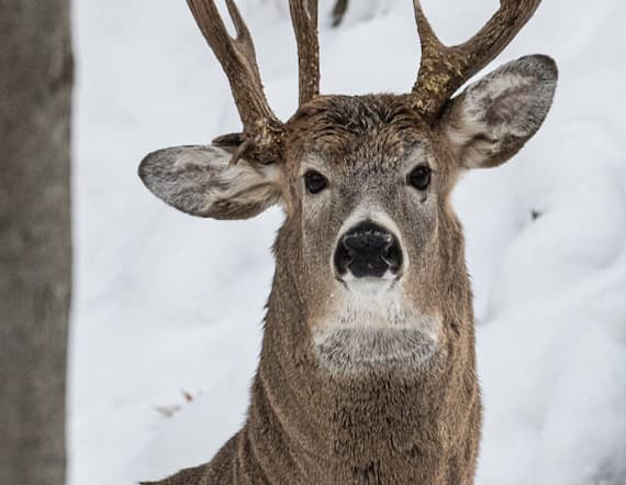 'One-in-a-million' buck spotted by former hunter