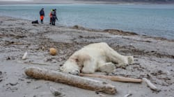 Polar Bear Killed After Attacking Cruise Ship Worker In