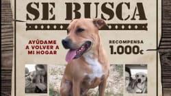 'Buscando a Nanuk', el movimiento viral para encontrar a un perro