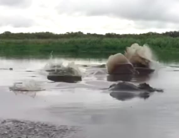 Video shows massive creatures make waves on river