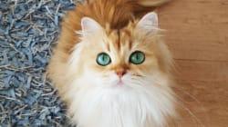 En cette journée internationale des chats, voici les félins les plus cute de la