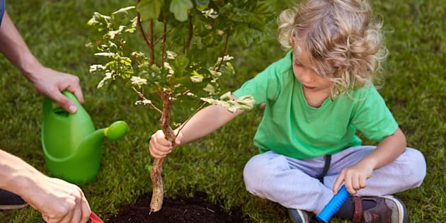 Small boy planting tree in garden, sitting on grass