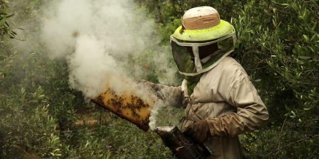 L'UE interdit quasi totalement trois néonicotinoïdes, jugés dangereux pour les abeilles (photo d'illustration)