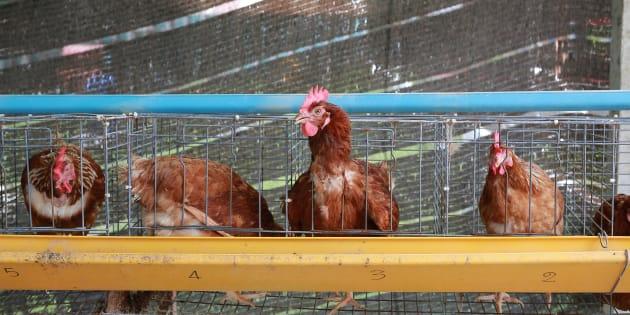 A chicken farm.