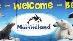 Les accusations de maltraitance portées contre Marineland sont