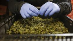 BLOG - Comment la régulation du cannabis permettrait des politiques en matière de drogues plus