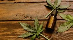 BLOGUE La pénurie de cannabis au Canada est