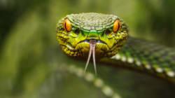 La peur des serpents et araignées serait inscrite dans votre
