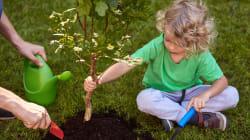 Alberi e orti contro il cambiamento climatico. Così ognuno di noi può fare la