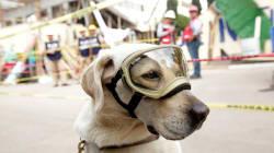 L'hommage poignant des supporters mexicains à Frida, ce chien sauveteur héros du séisme à