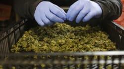 La propuesta de despenalizar la marihuana 'huele' bien a pacientes con
