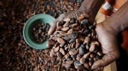 Ferrero, Lindt, Nestlé et d'autres grandes marques soupçonnées de se fournir en cacao