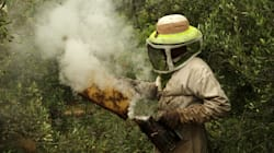 L'UE interdit quasi totalement trois pesticides, jugés dangereux pour les