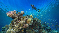 Los arrecifes de coral se están quemando vivos para que los humanos