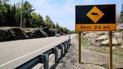 Yes, You Can Eat Roadkill In Canada — If You Have The Proper