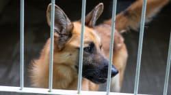 Decenas de personas acogen a los perros de una protectora de Valencia inundada por las