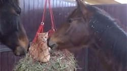 Kittens Become Friends With Horses After Playing In Their Hay