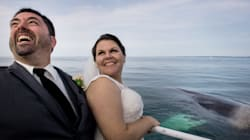 Breaching Whales Bless New Brunswick Couple's