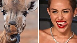 Here's A Bunch Of Celebrities That Look Like