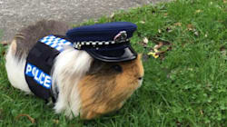 New Zealand Police Have Recruited This Adorable Road Safety